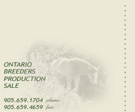 Ontario Breeders Production Sale - Check out our horses for sale